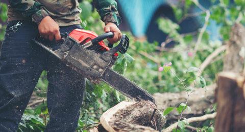 Abattage d'un arbre par Damien Paysages